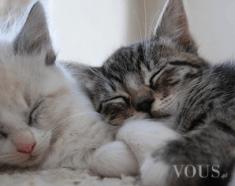 Kici kici, dwa słodkie śpiące kotki