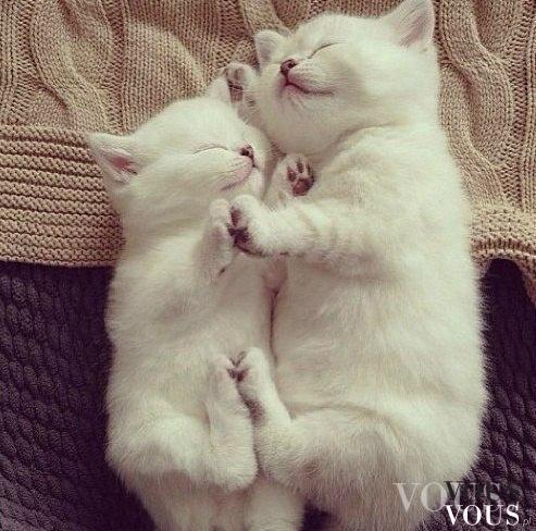 Kochane kociaki <3