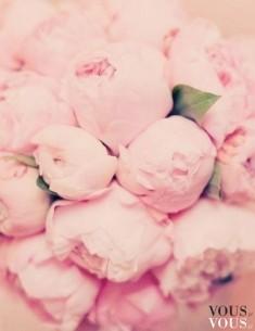 Nierozkwitnięte pąki róż