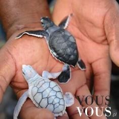 Małe żółwie, ma ktoś żółwie?
