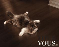 Kot polerujący podłogę, koty, koteczki