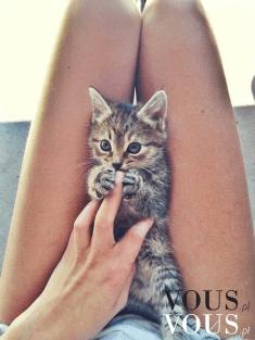 Słodki kotek na kolanach, małe kotki są idealne do przytulania