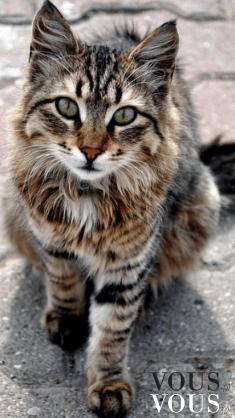 Śliczny kotek w prążki