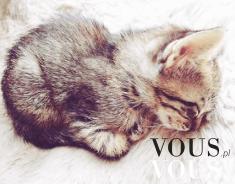 Maleńki koteczek podczas drzemki