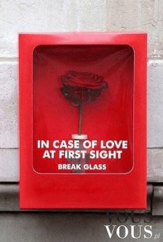 Piękna czerwona róża