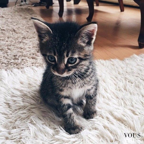 Śliczny maleńki koteczek
