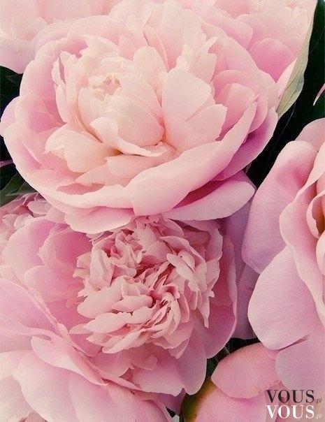 Różowe kawiaty