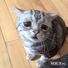 Smutny kotek, mały kot, koci wzrok