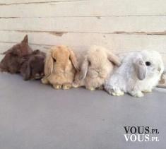 małe króliczki, słodkie króliki, zajączki