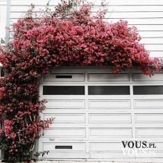 kwiaty rosnące na ścianie, bluszcz