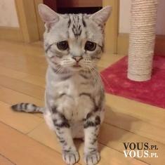 kot, kotek, koci wzrok