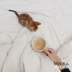 mały kotek próbuje kawy