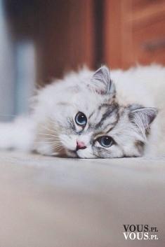 słodki biały kot, fani kotów, kocham koty