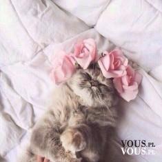 śpiący kot, kot w łóżku