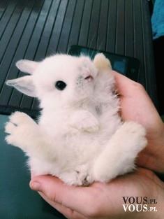 słodki mały króliczek, zajączek, mały królik
