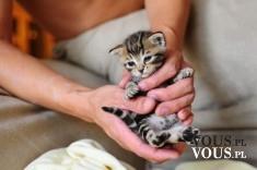 mały kotek , jak opiekować się małymi kotami