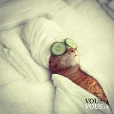 Zrelaksowany kotek. Kocie spa.