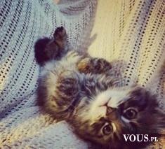malutki kotek, kto lubi małe koty, jak bawić się z małym kotem