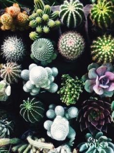 najcudowniejsze roślinki, must have, kaktus jako dekoracja