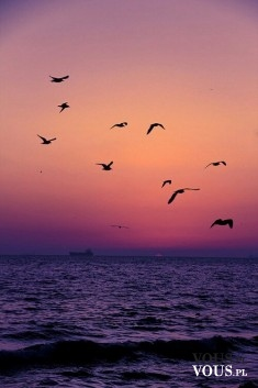 ptaki nad oceanem, zachód słońca