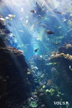 rafa koralowa, ryby w oceanie, podwodny świat