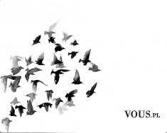 rysunek ptaków, szkic, jak nauczyć się rysować