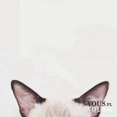 kocie uszy, zalety kotów, fani kotów
