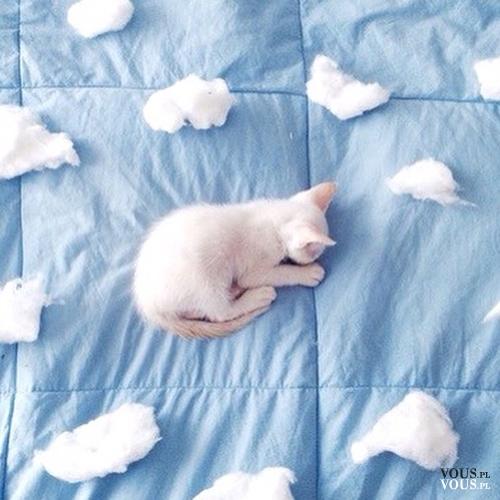 słodki biały kotek