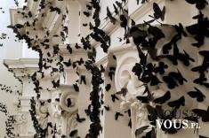 czarne motyle na białych kolumnach