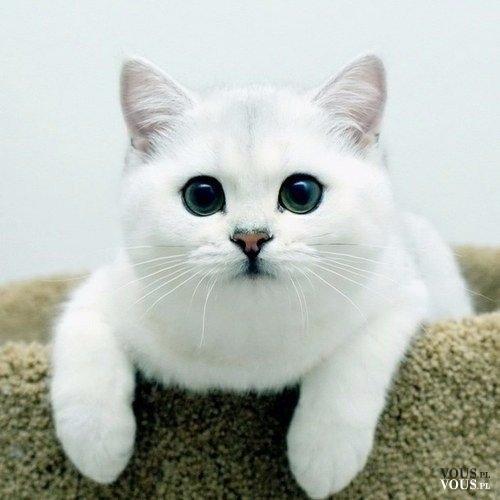 Biały kociak. Śliczny biały koteczek <3
