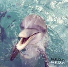 Delfin, słodki i przyjazny delfinek <3