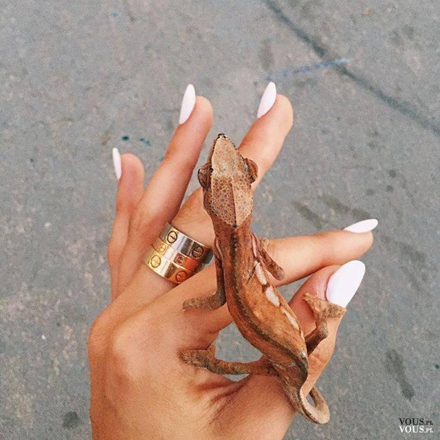 Urocza mała jaszczurka, lubicie takie zwierzaki? :)