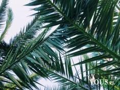 Palma, zielone rośliny, egzotyczne rośliny,