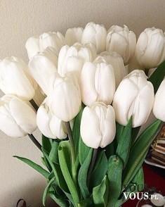 Świeże kwiaty, bukiet kwiatów, białe tulipany
