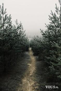 Mroczna droga przez las. Czy można chodzić w nocy po lesie?