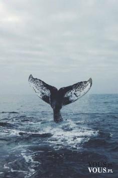 Piękne zdjęcie, wieloryb w fali, ogon wieloryba, Gdzie można pojechać by zobaczyć wieloryba bądź ...