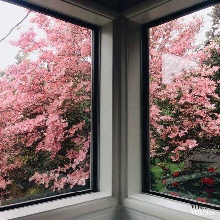 Piękne drzewo za oknem. Jak pięknie i bogato zaprojektować i pielęgnować ogród?