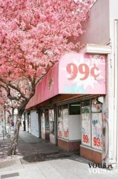 Piękna różowa uliczka, gdzie znajdę ładną scenografie do zdjęć? Piękne różowe drzewa.