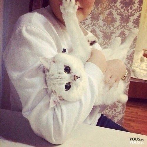 Śliczny biały kot, biała kotka z dużymi oczami. Jaka to rasa?