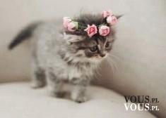 Słodziutki kotek z wiankiem z róż na głowie