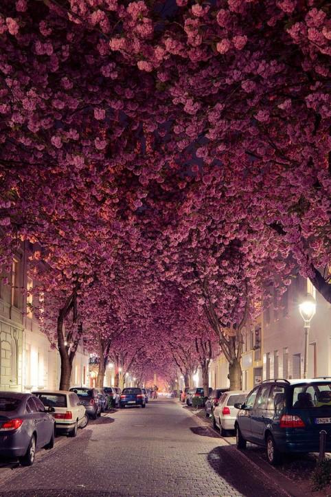 Cudowna alejka, kwitnące drzewa nocą