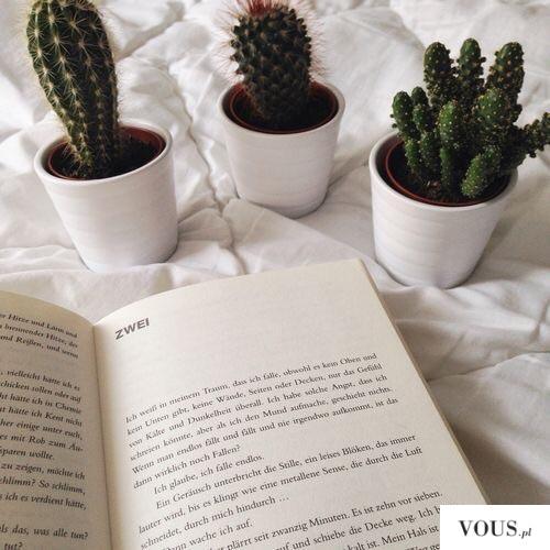 Wystrój, małe kaktusiki w białych doniczkach