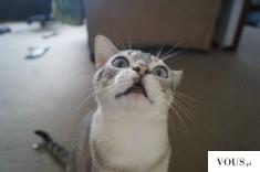 kot z otwartą paszczą