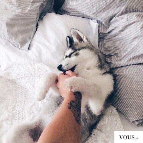 Piękny piesek biało szary