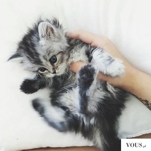 maleńki kotek