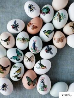jajeczka w motyle i ptaki
