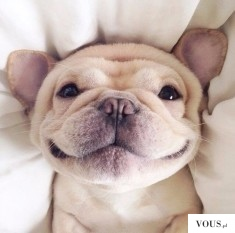 Uśmiechnięty pies, jaka to rasa? Czy psy się uśmiechają?