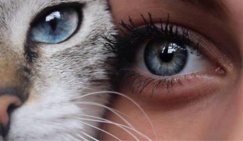 Niebieskie oczy kocie i kobiece