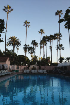 Plaża, gdzie moge wyjechać by były palmy?