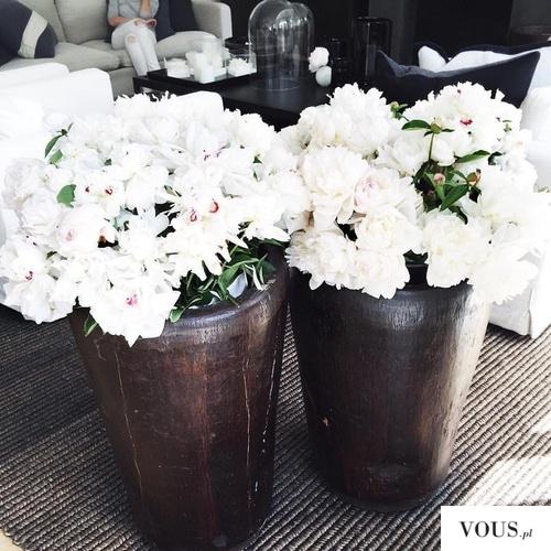 białe kwiaty w czarno brązowych doniczkach